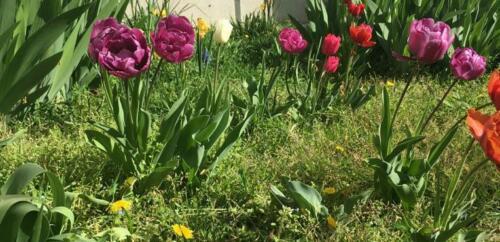 cropped-tulipes-1.jpg
